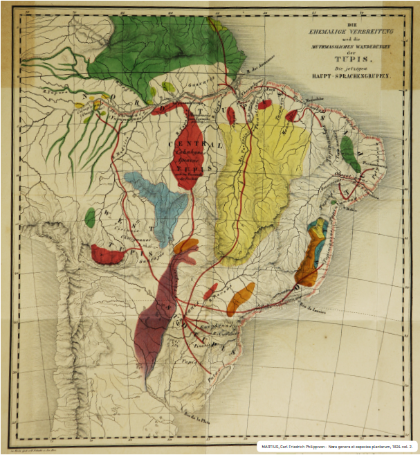 "Imagem em ""Nova genera et species plantarum [...]"" , Carl Friedrich Philipp von Martius, 1824.  Acervo da Biblioteca Brasiliana Guita e José Mildlin,  USP."